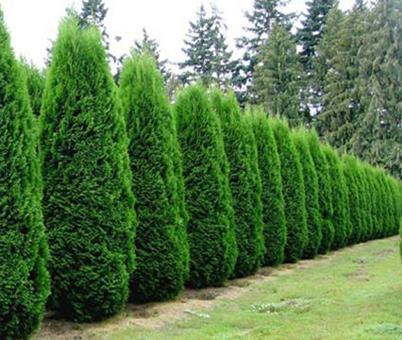 Bushes For Shady Areas