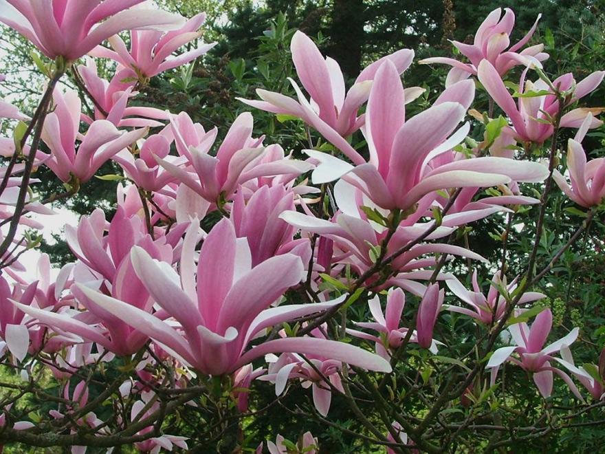 betty magnolia. Black Bedroom Furniture Sets. Home Design Ideas