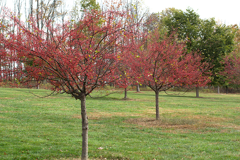 Common Landscape Plants Shrubs Flowers Trees | Tattoo ... - photo #7